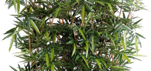 prix bambou en pot jardiland pivoine etc