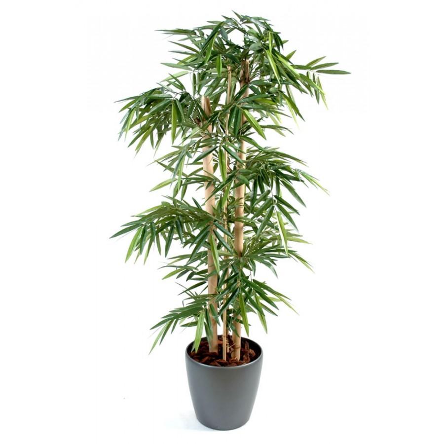 Bambou En Pot Int 233 Rieur Pivoine Etc
