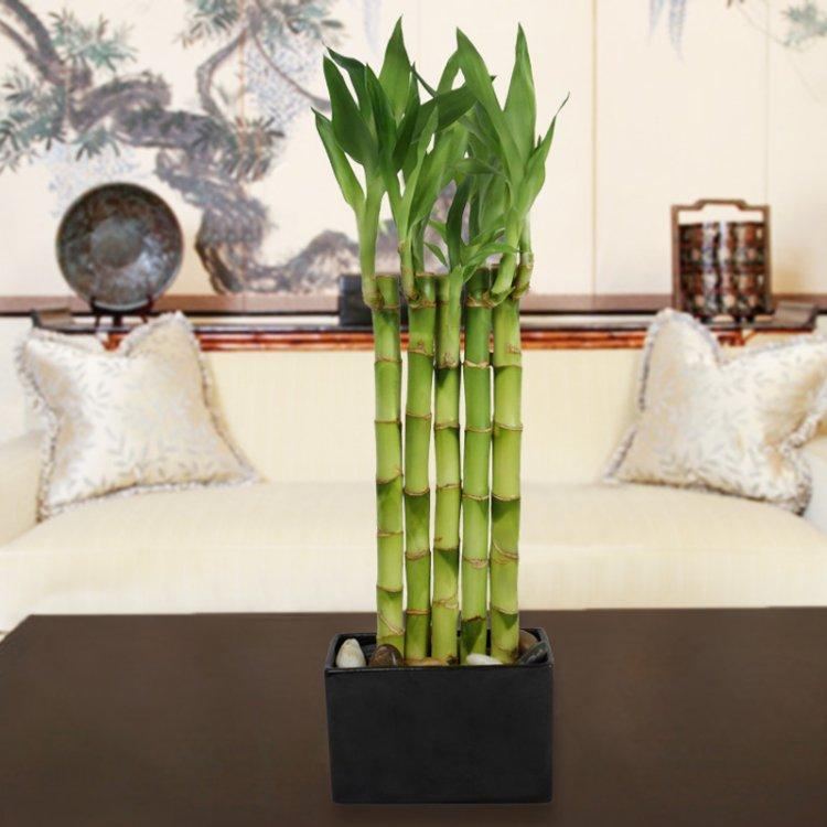Entretien bambou pot pivoine etc for Bambou interieur entretien