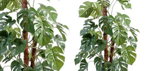Vente graine tropicale pivoine etc for Vente plante verte