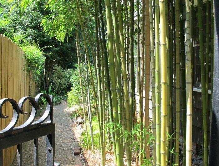 comment planter un bambou en pleine terre pivoine etc. Black Bedroom Furniture Sets. Home Design Ideas