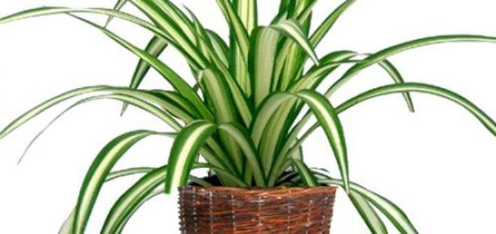 plantes grasses entretien pivoine etc. Black Bedroom Furniture Sets. Home Design Ideas