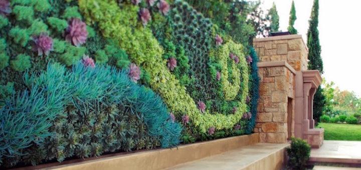plantes pour mur v g tal ext rieur pivoine etc. Black Bedroom Furniture Sets. Home Design Ideas