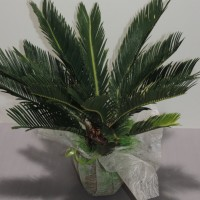 plante exterieur qui ne gele pas pivoine etc. Black Bedroom Furniture Sets. Home Design Ideas