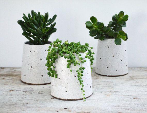 plante grasse en pot pivoine etc. Black Bedroom Furniture Sets. Home Design Ideas