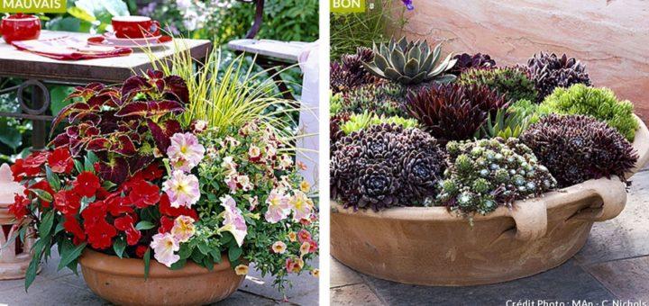 plante en pot exterieur sans arrosage pivoine etc. Black Bedroom Furniture Sets. Home Design Ideas