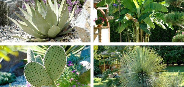 Plante exotique jardin pivoine etc for Plante exotique jardin