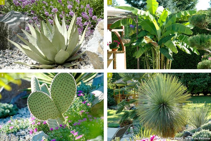plante exotique resistant au froid pivoine etc. Black Bedroom Furniture Sets. Home Design Ideas