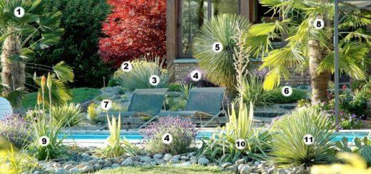Achat de plantes en ligne pivoine etc for Achat plantes jardin en ligne