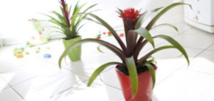 plante verte avec fleur rouge pivoine etc. Black Bedroom Furniture Sets. Home Design Ideas
