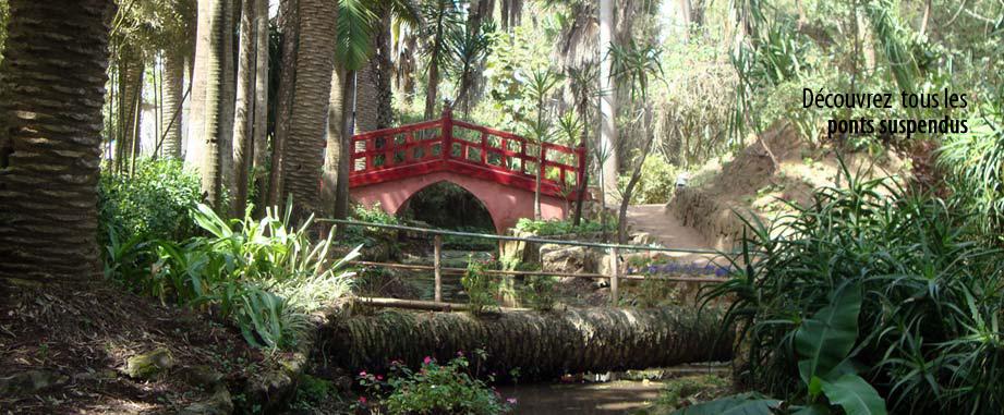 Jardins exotiques pivoine etc - Photo jardin exotique ...