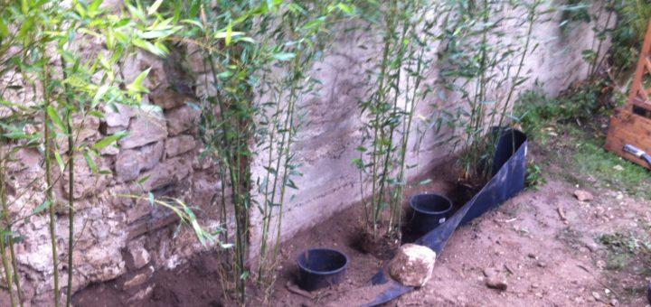 comment planter les bambous en pot pivoine etc. Black Bedroom Furniture Sets. Home Design Ideas