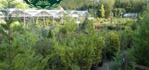 Vente plante verte en ligne pivoine etc for Vente plante en ligne