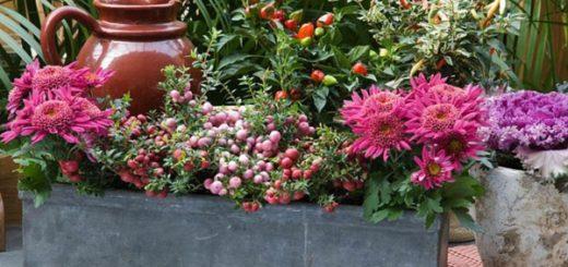 Plante hiver archives page 3 of 15 pivoine etc - Jardiniere automne hiver ...