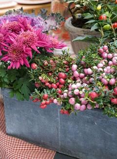Fleurs automne jardiniere - pivoine etc