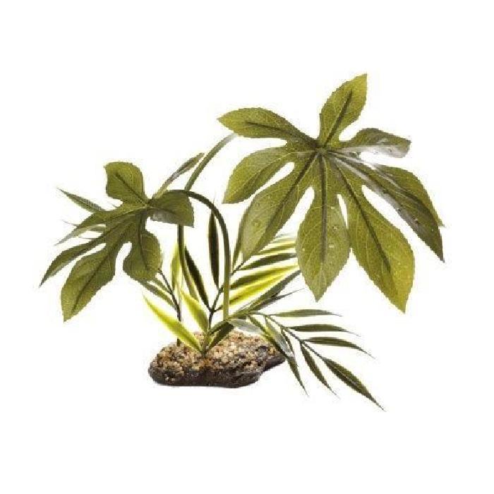 achat plante tropicale pivoine etc. Black Bedroom Furniture Sets. Home Design Ideas
