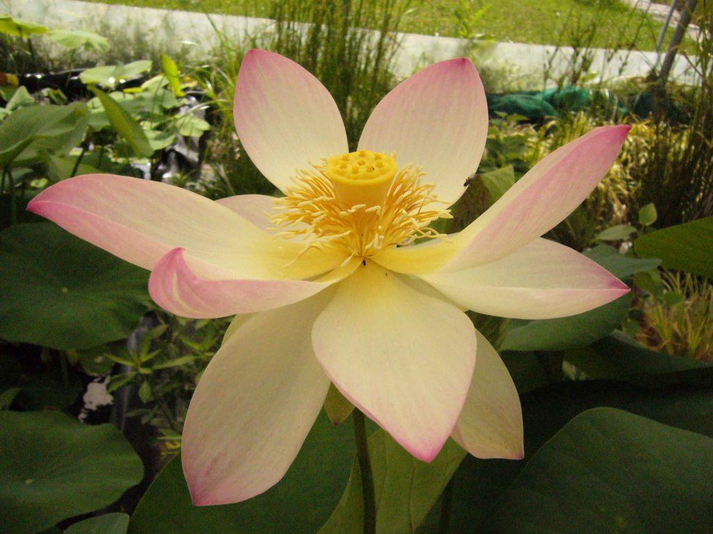 Vente en ligne de plantes pivoine etc for Vente de fleurs en ligne