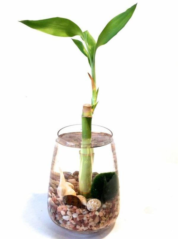 comment entretenir bambou en pot pivoine etc. Black Bedroom Furniture Sets. Home Design Ideas