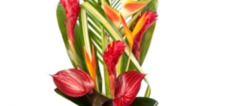 livraison fleurs exotiques domicile pivoine etc. Black Bedroom Furniture Sets. Home Design Ideas