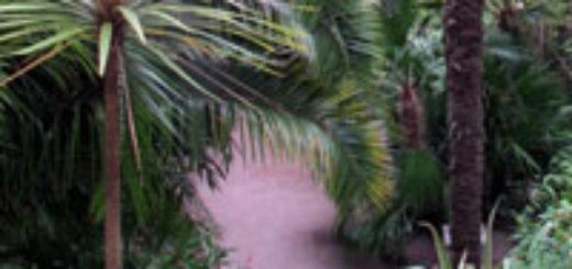 Plante palmier pivoine etc for Plante palmier