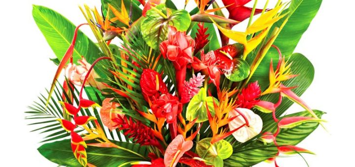 Livraison fleurs tropicales pivoine etc for Livraison fleurs exotiques
