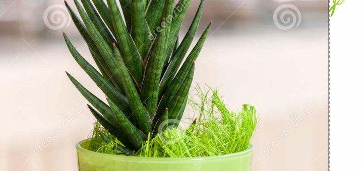 petite plante verte pivoine etc. Black Bedroom Furniture Sets. Home Design Ideas