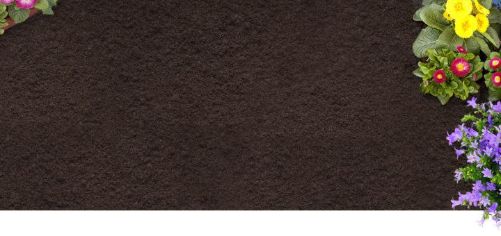 plante pour massif exterieur pivoine etc. Black Bedroom Furniture Sets. Home Design Ideas