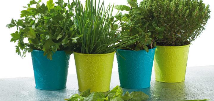 planter plantes aromatiques pivoine etc. Black Bedroom Furniture Sets. Home Design Ideas