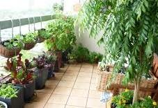 plante de balcon pivoine etc. Black Bedroom Furniture Sets. Home Design Ideas