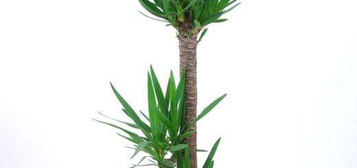 Plante retombante ext rieur vivace pivoine etc for Plante verte exterieur vivace