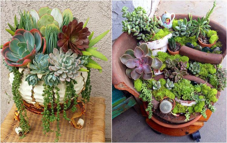 terre pour plantes grasses pivoine etc. Black Bedroom Furniture Sets. Home Design Ideas