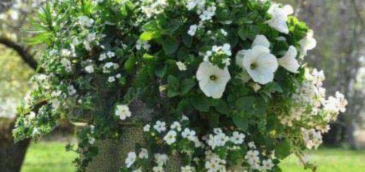 Plante verte haute exterieur pivoine etc for Plante verte haute exterieur