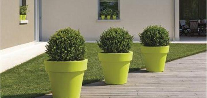Quelle plante pour grand pot exterieur pivoine etc for Grand pot plante exterieur