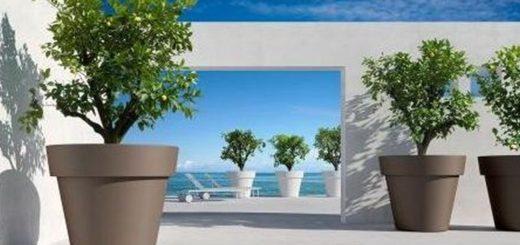 Plante exterieur sans entretien pivoine etc for Plante exterieur sans entretien