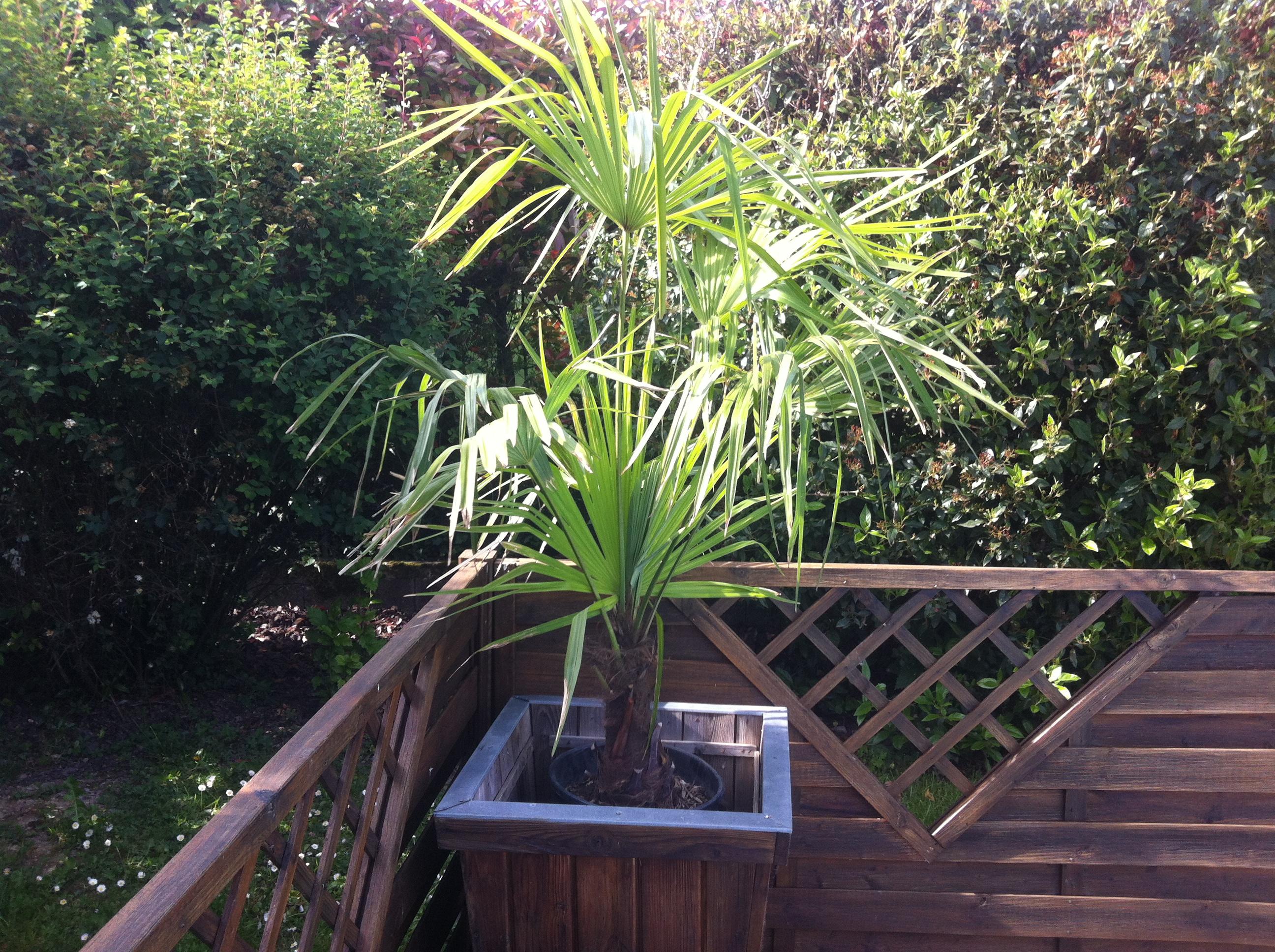 plante resistante au froid pivoine etc. Black Bedroom Furniture Sets. Home Design Ideas