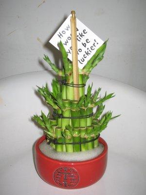 bambou int rieur entretien pivoine etc. Black Bedroom Furniture Sets. Home Design Ideas