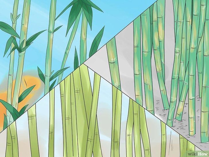 Comment faire pousser du bambou en pot pivoine etc - Faire pousser du bambou ...